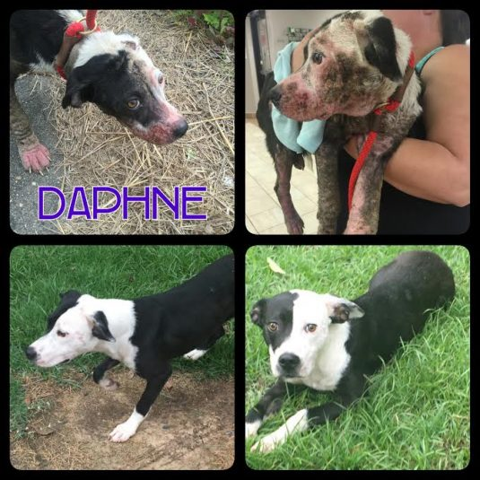 Daphne before after
